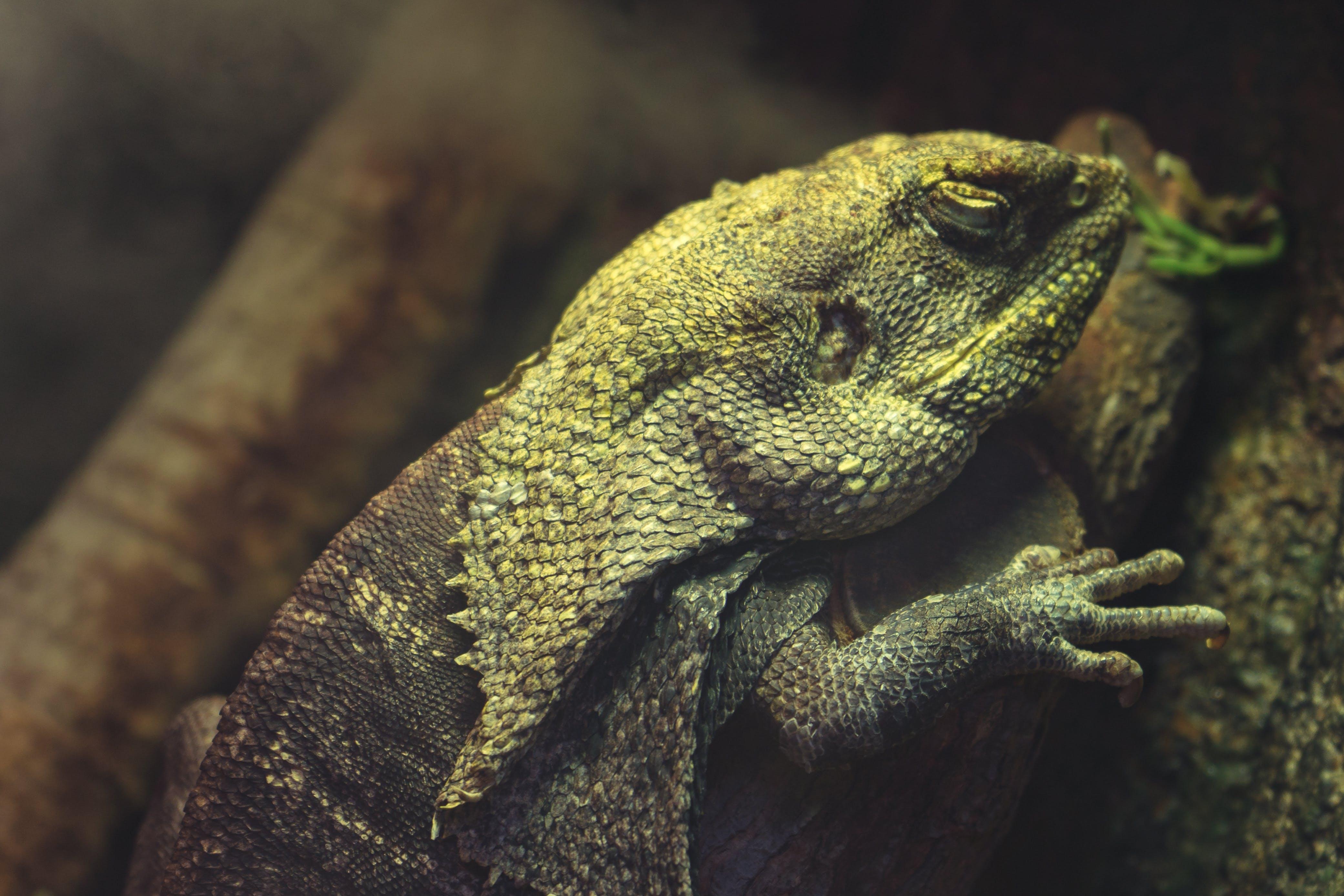 barevný, barva, chameleon
