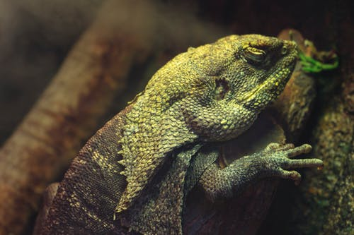 Gratis arkivbilde med dyr, dyrefotografering, dyreliv, eksotisk