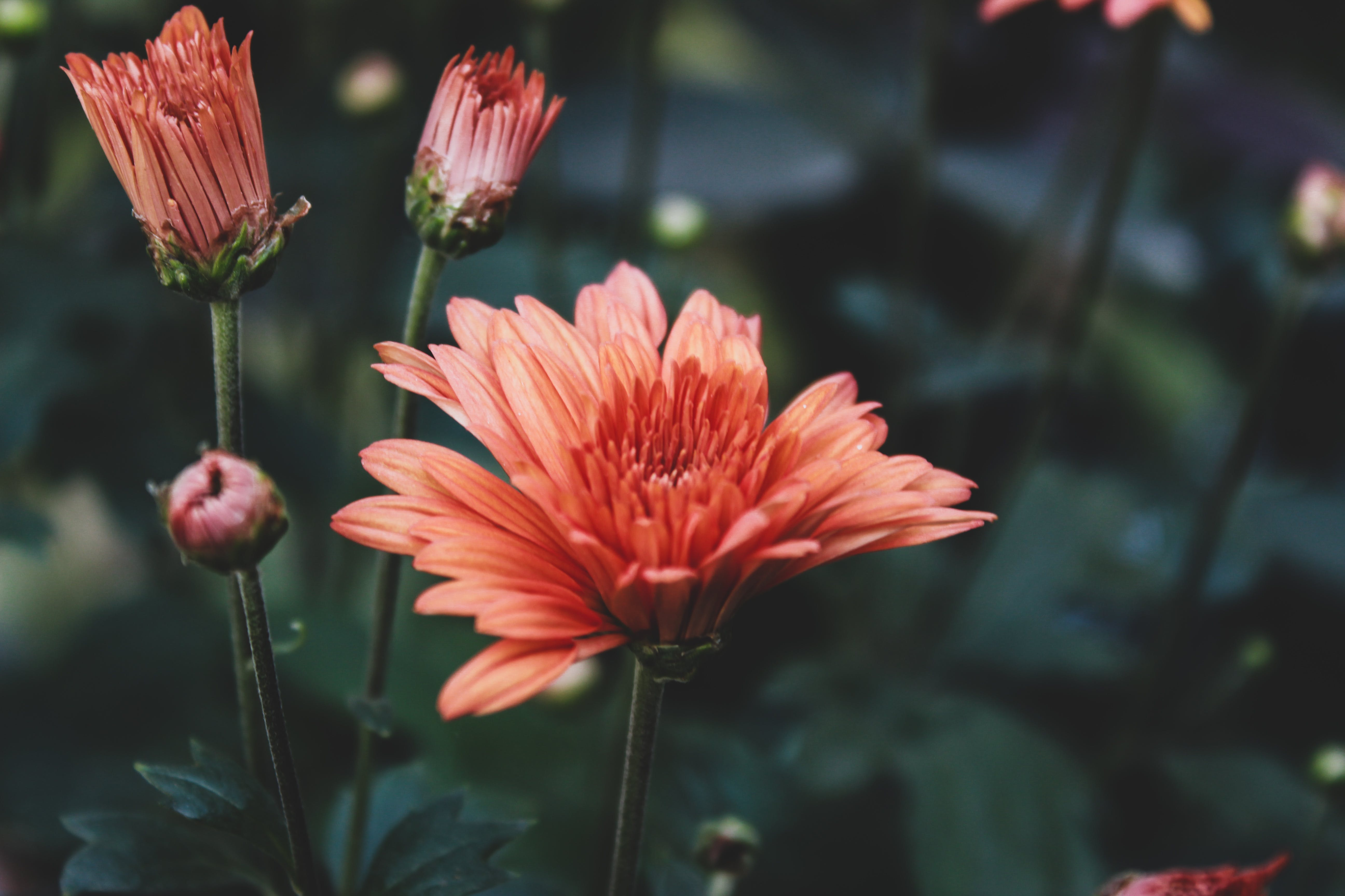 Free stock photo of 4k wallpaper, beauty in nature, field of flowers, outdoor photography