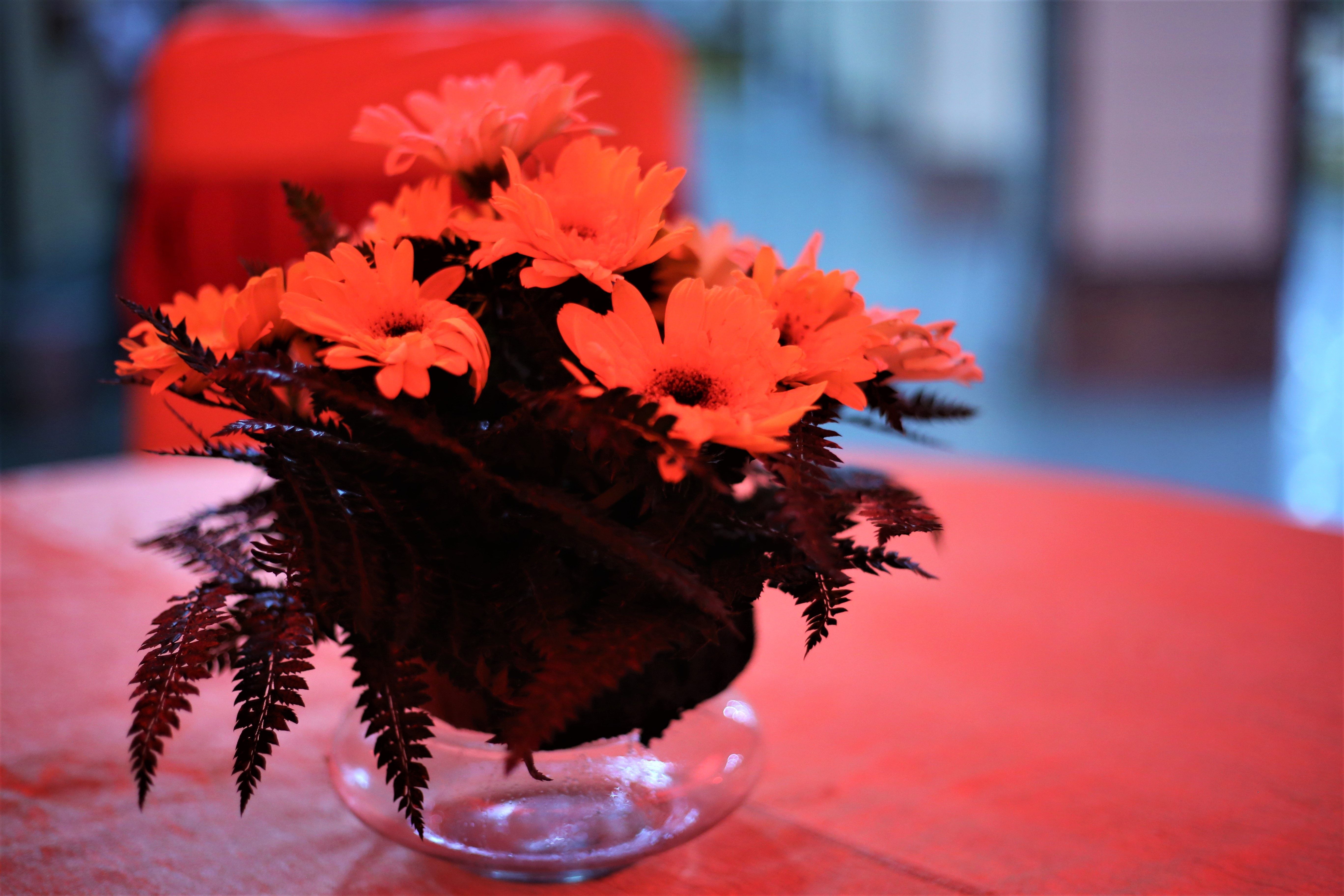 Free stock photo of beautiful flowers, FLOWER ON TABLE, flowers