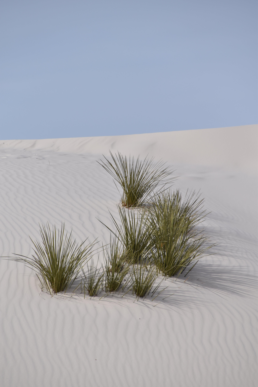 Gratis lagerfoto af himmel, klit, plante, sand