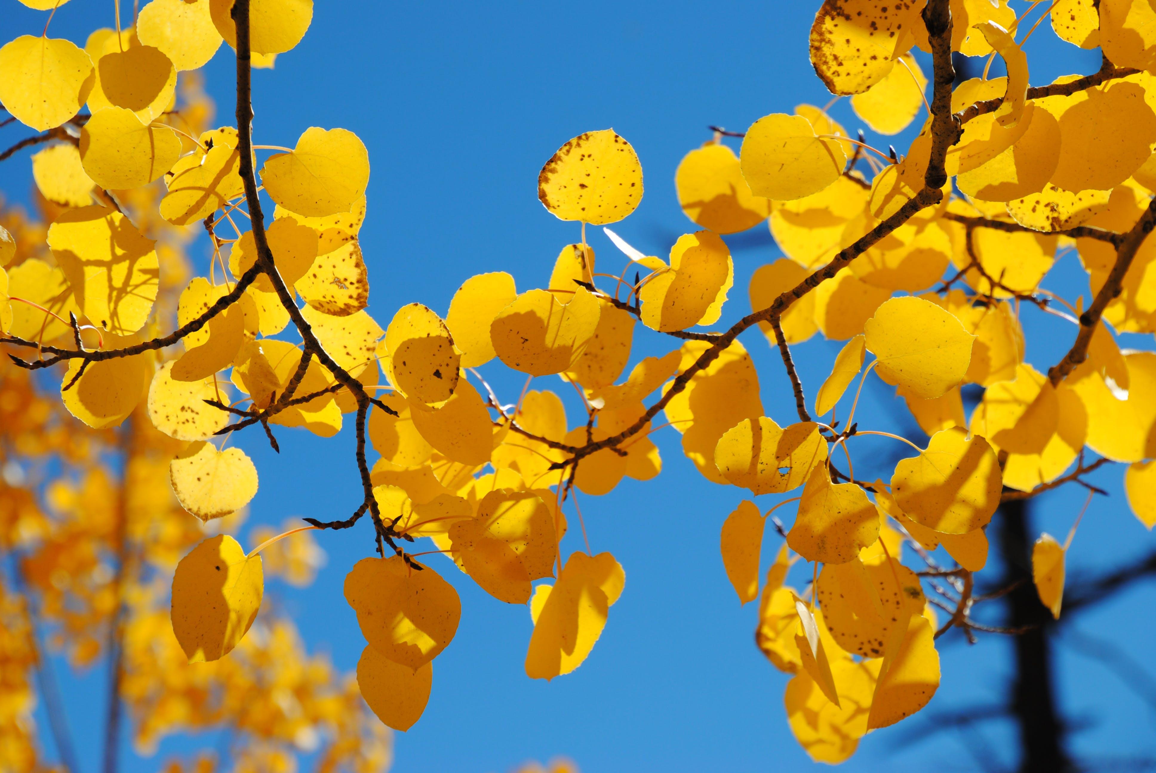 ゴールド, 空, 色落ち, 青の無料の写真素材