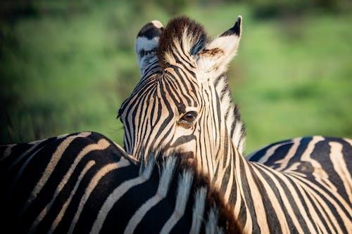 動物, 哺乳動物, 天性, 專注 的 免費圖庫相片