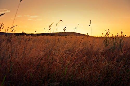 Δωρεάν στοκ φωτογραφιών με δύση του ηλίου, ηλιοβασίλεμα, καλοκαίρι, χρυσοκίτρινο