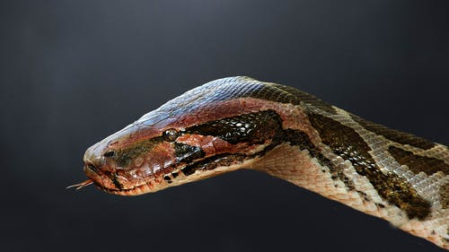 Free stock photo of the python in the darkness