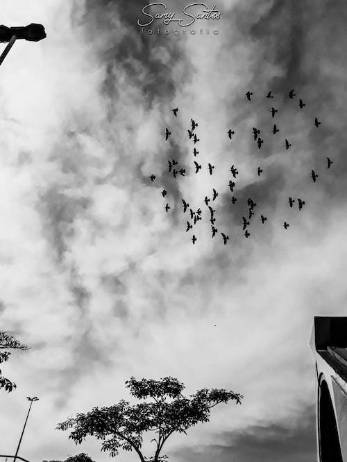 fotografia, natureza, papel de parede, passaros'ta içeren Ücretsiz stok fotoğraf