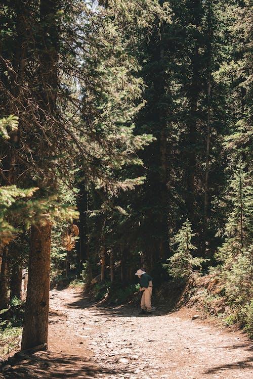 Fotos de stock gratuitas de arboles, bosque, brillante, camino sin pavimentar