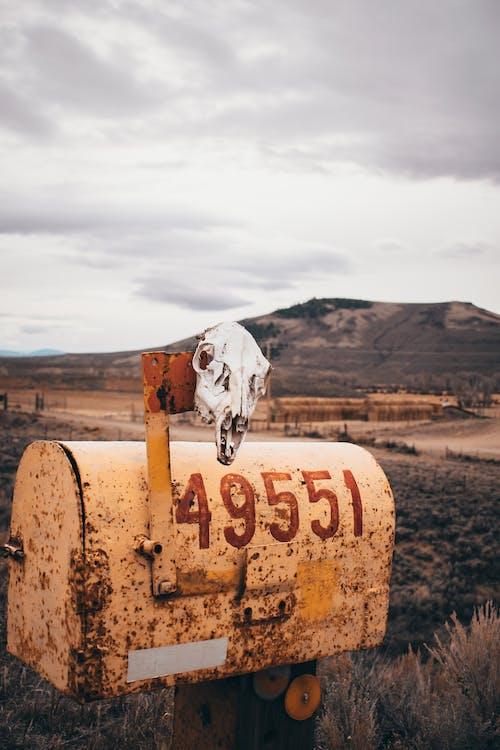 Foto d'estoc gratuïta de a pagès, abandonat, arbres, brillant