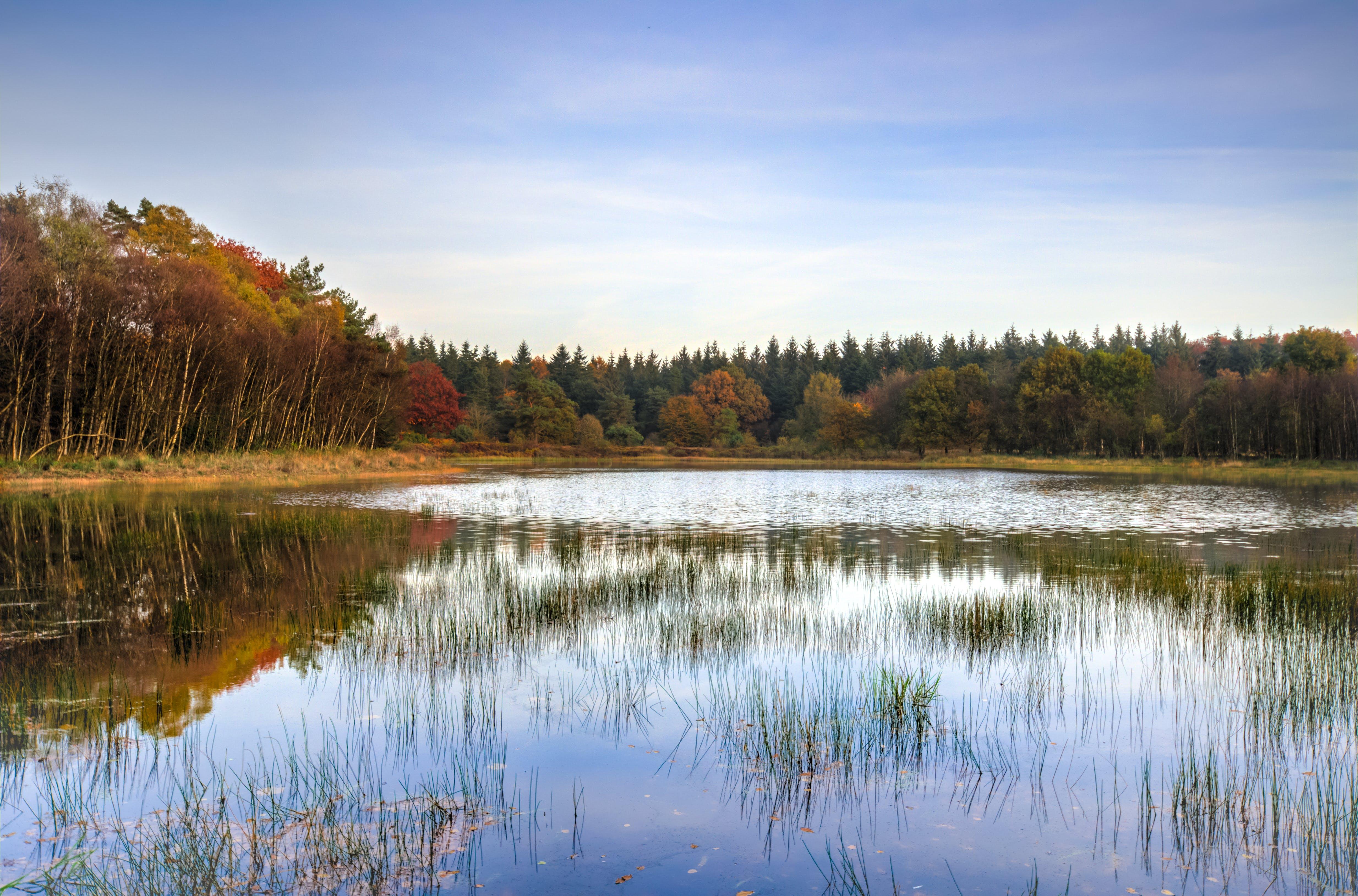 Gratis stockfoto met bossen, coniferen, daglicht, dennen