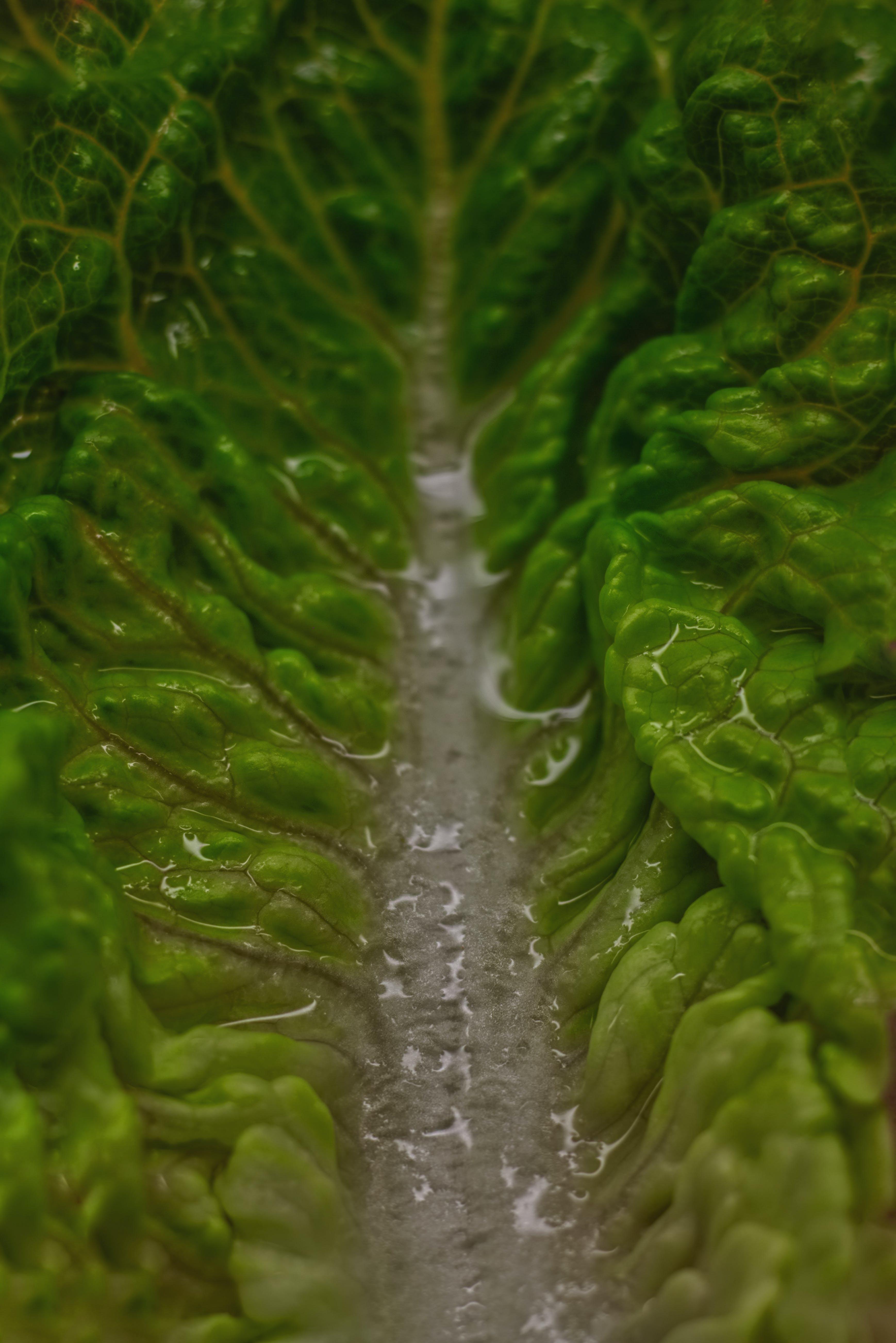 Free stock photo of green, kitchen, lettuce, macro photo
