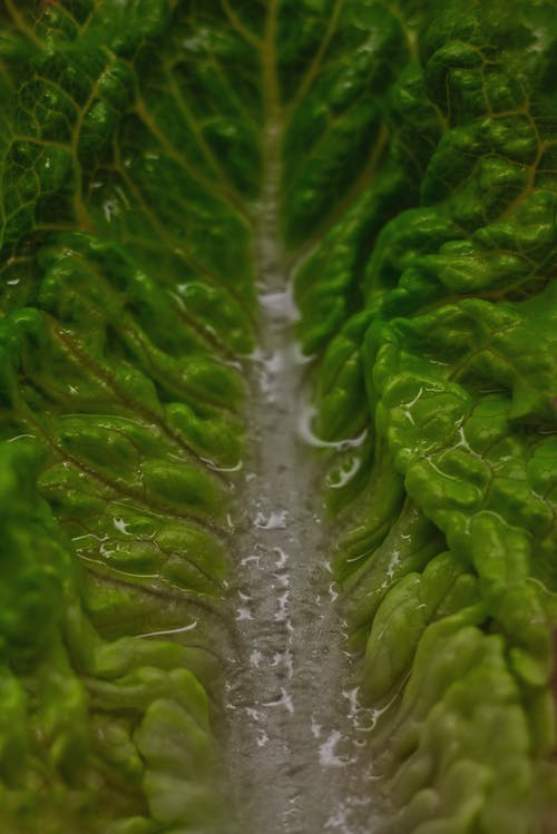 Free stock photo of green, kitchen, lettuce, macro photo