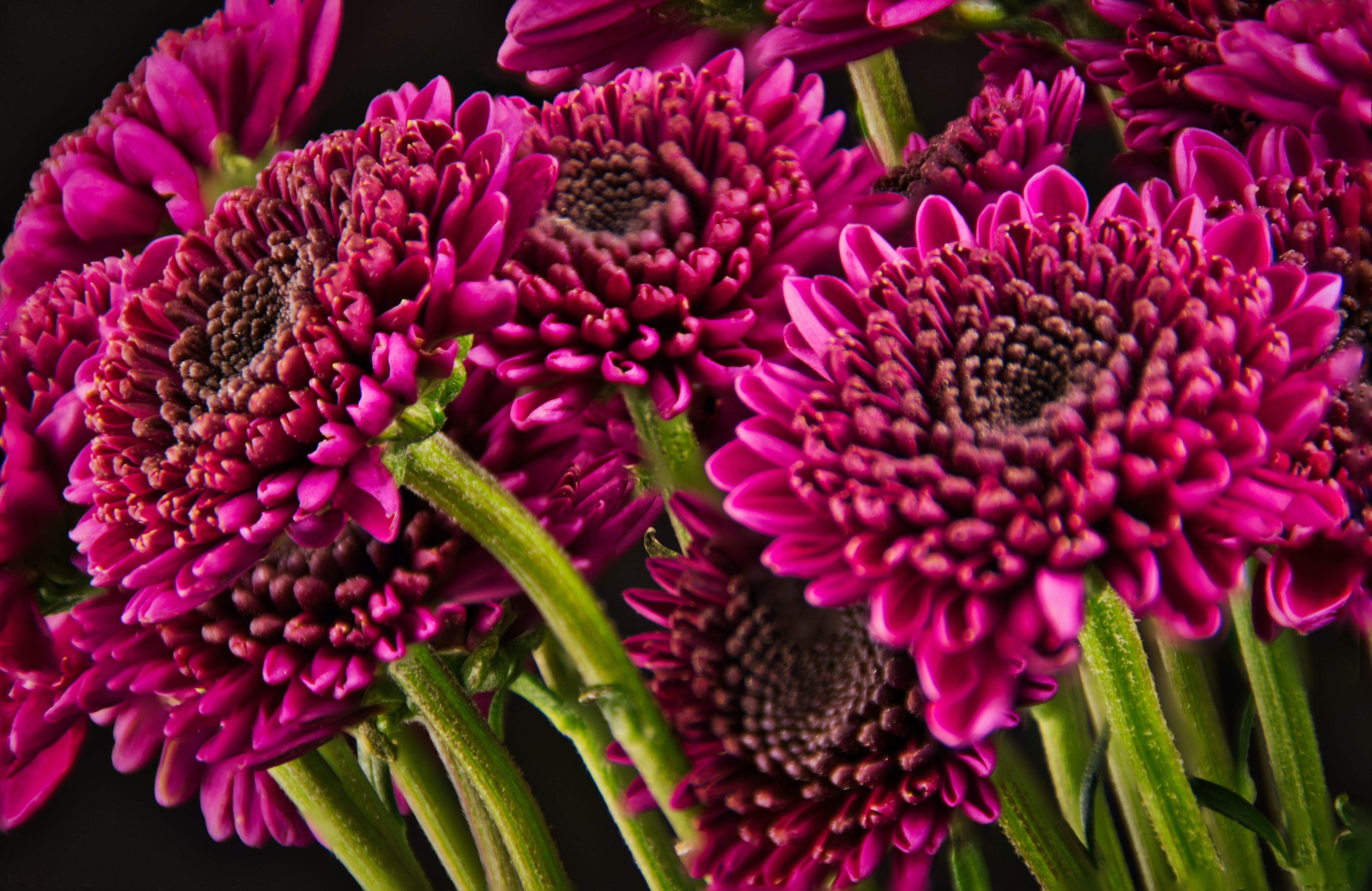 Free stock photo of flowers, macro, macro photography, violet