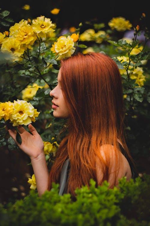กลีบดอก, กลีบดอกไม้, การถ่ายภาพ