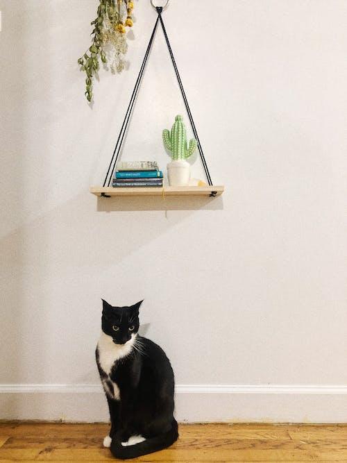 Free stock photo of apartment, cat, decor, kitty