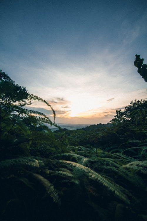 Free stock photo of beauty in nature, golden sun, high rise, Malaysia