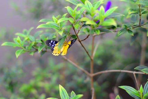 Δωρεάν στοκ φωτογραφιών με background, macro, άγρια φύση, άγριος