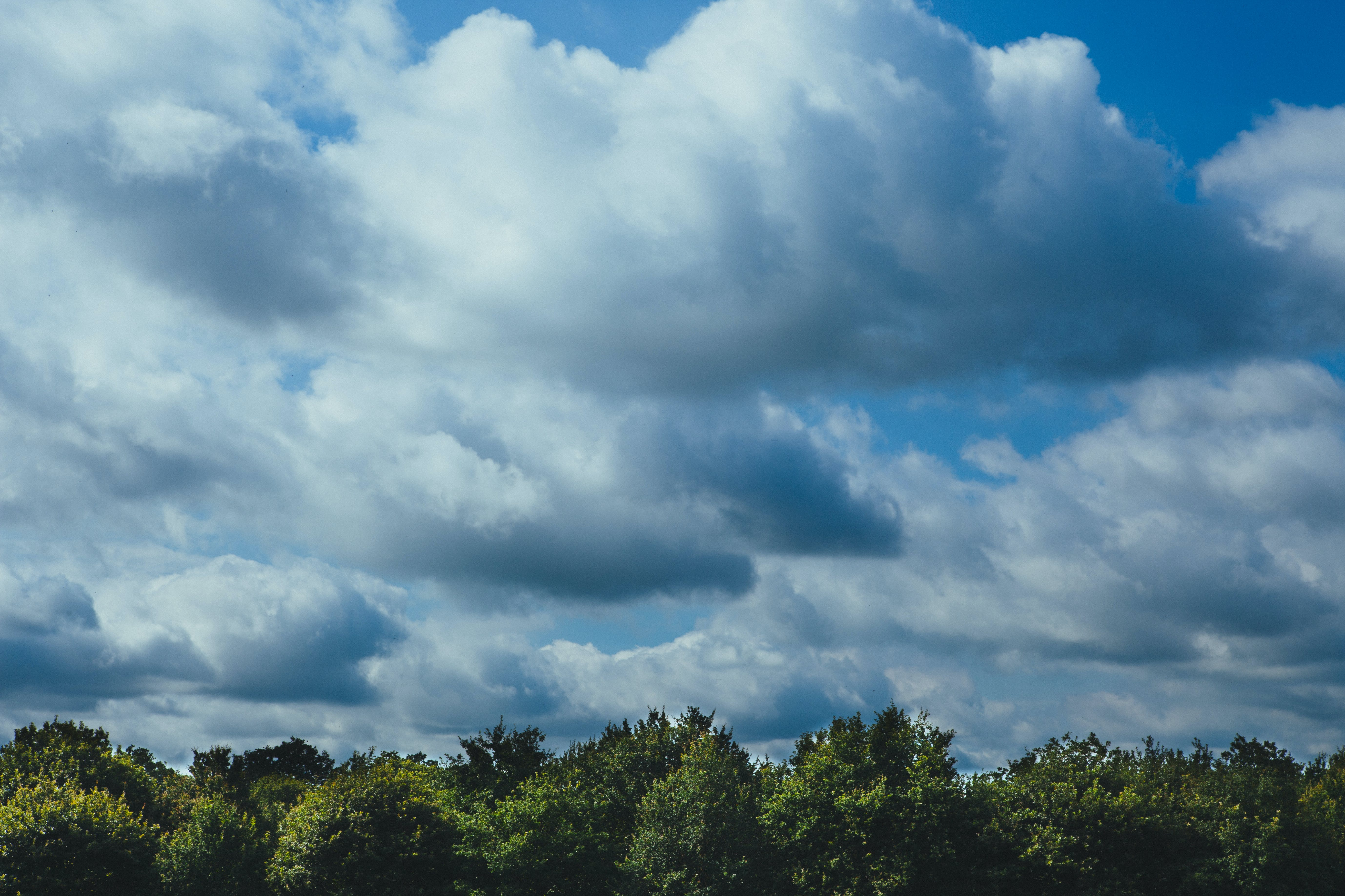 clouds, cloudy, forest