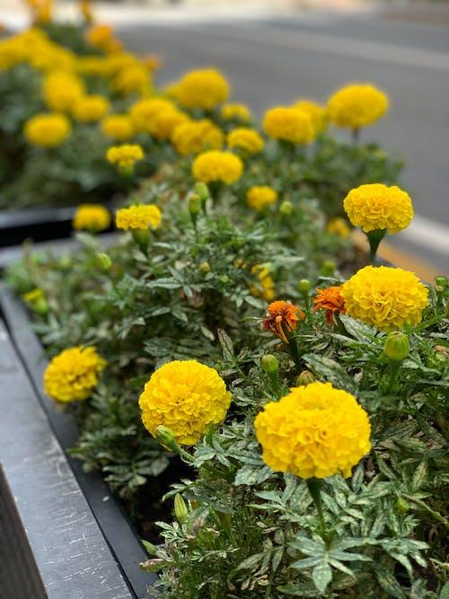 Gratis lagerfoto af blomster