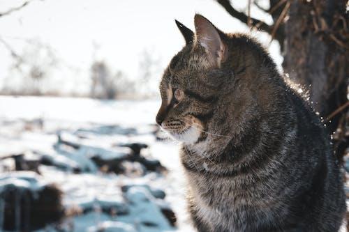 Бесплатное стоковое фото с день, дерево, зима, кошка
