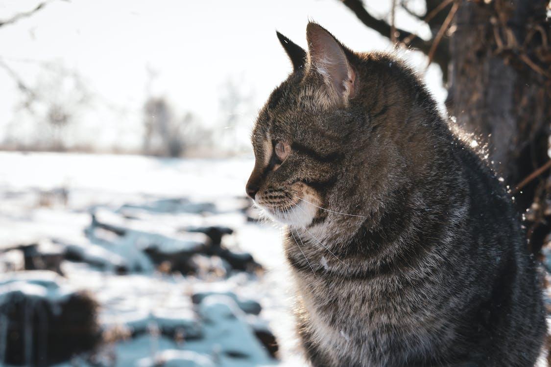 Γάτα, γλυκούλι, δέντρο