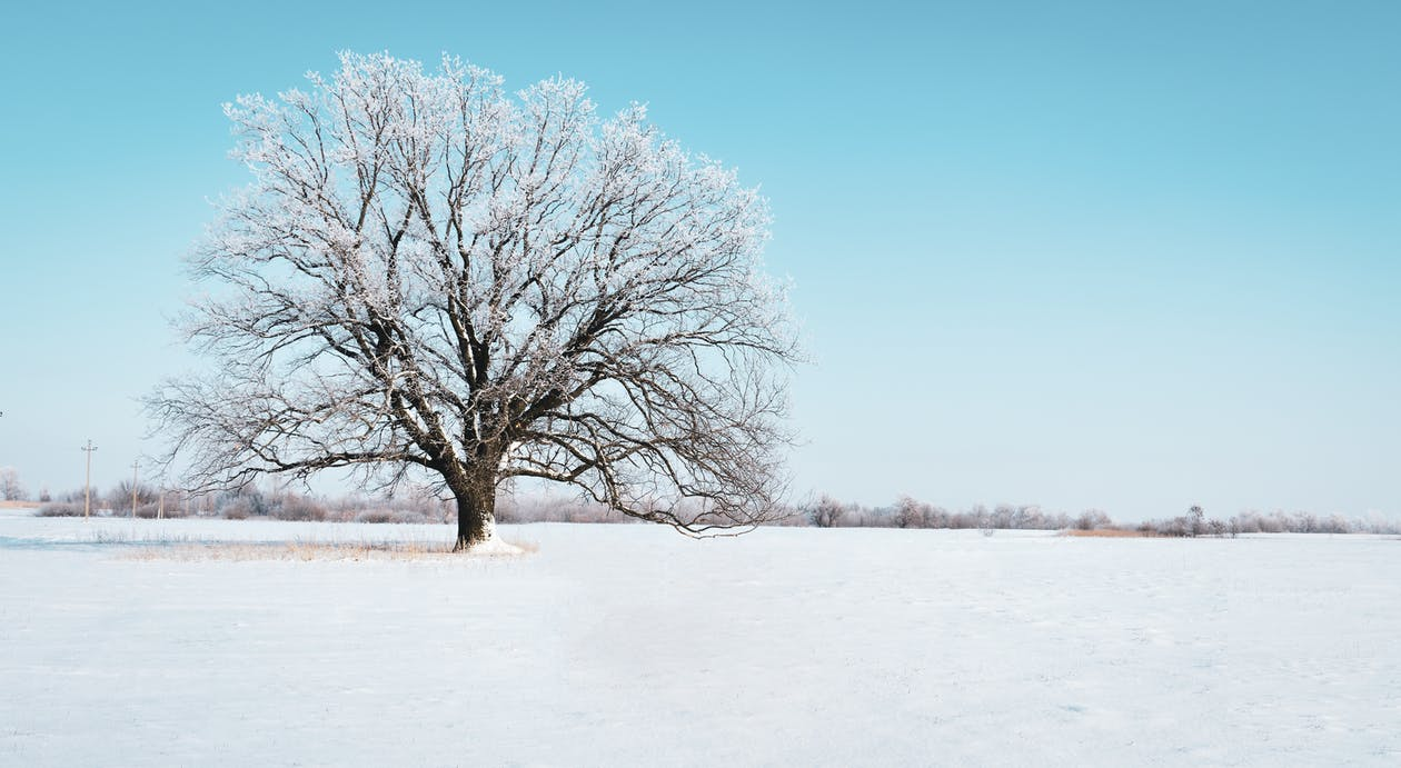 Photo of Tree Covered With Snow
