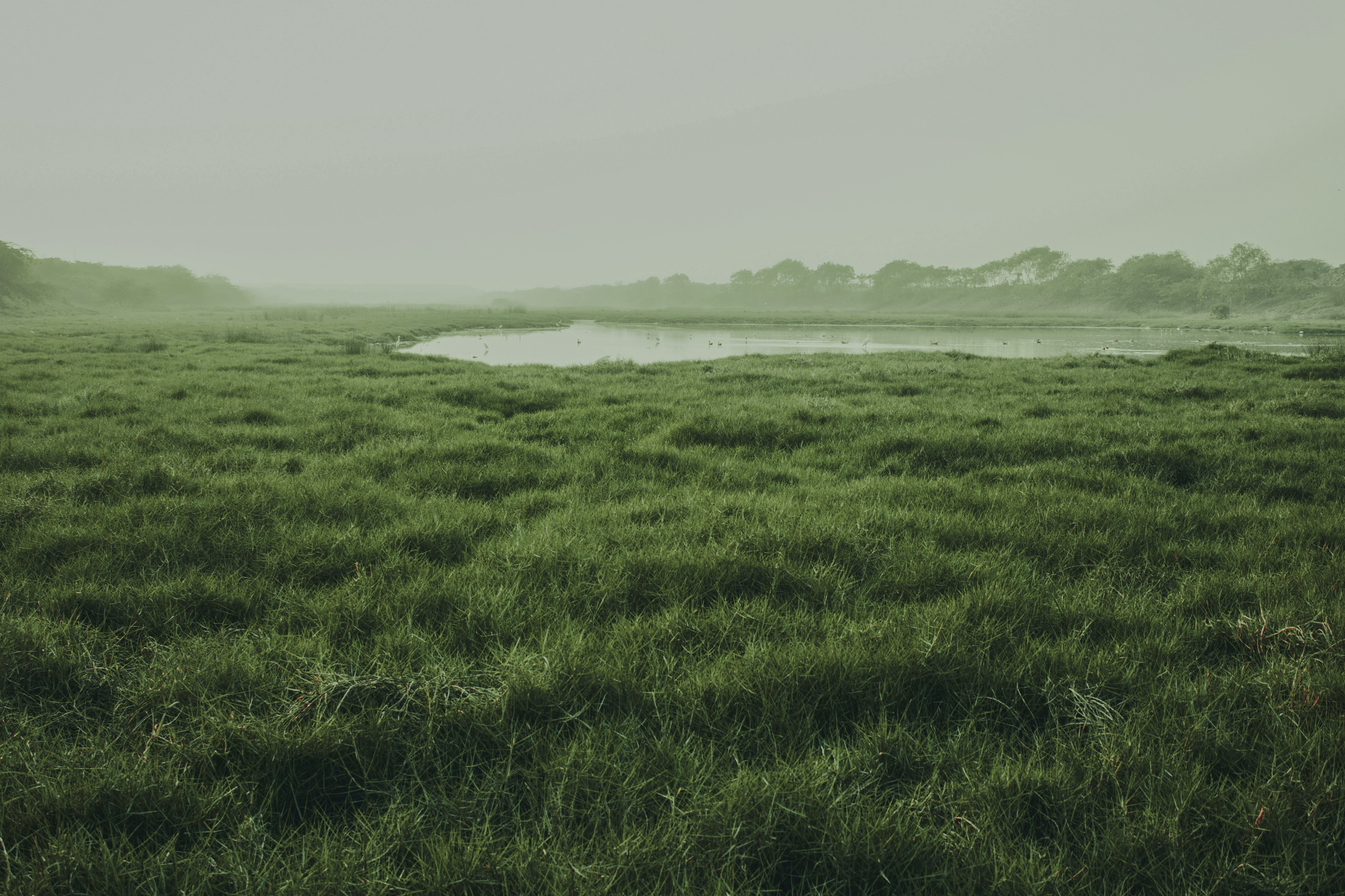 Free stock photo of beautiful view, beauty, beauty in nature, grass