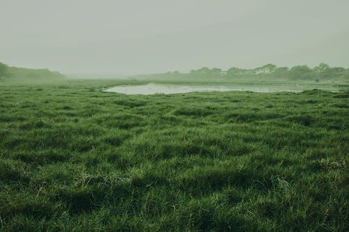 Ilmainen kuvapankkikuva tunnisteilla joen ranta, Kauneus, kauneus luonnossa, maisema