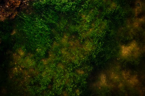Ilmainen kuvapankkikuva tunnisteilla hiekkainen, meren sammal, punakivi, ruoho