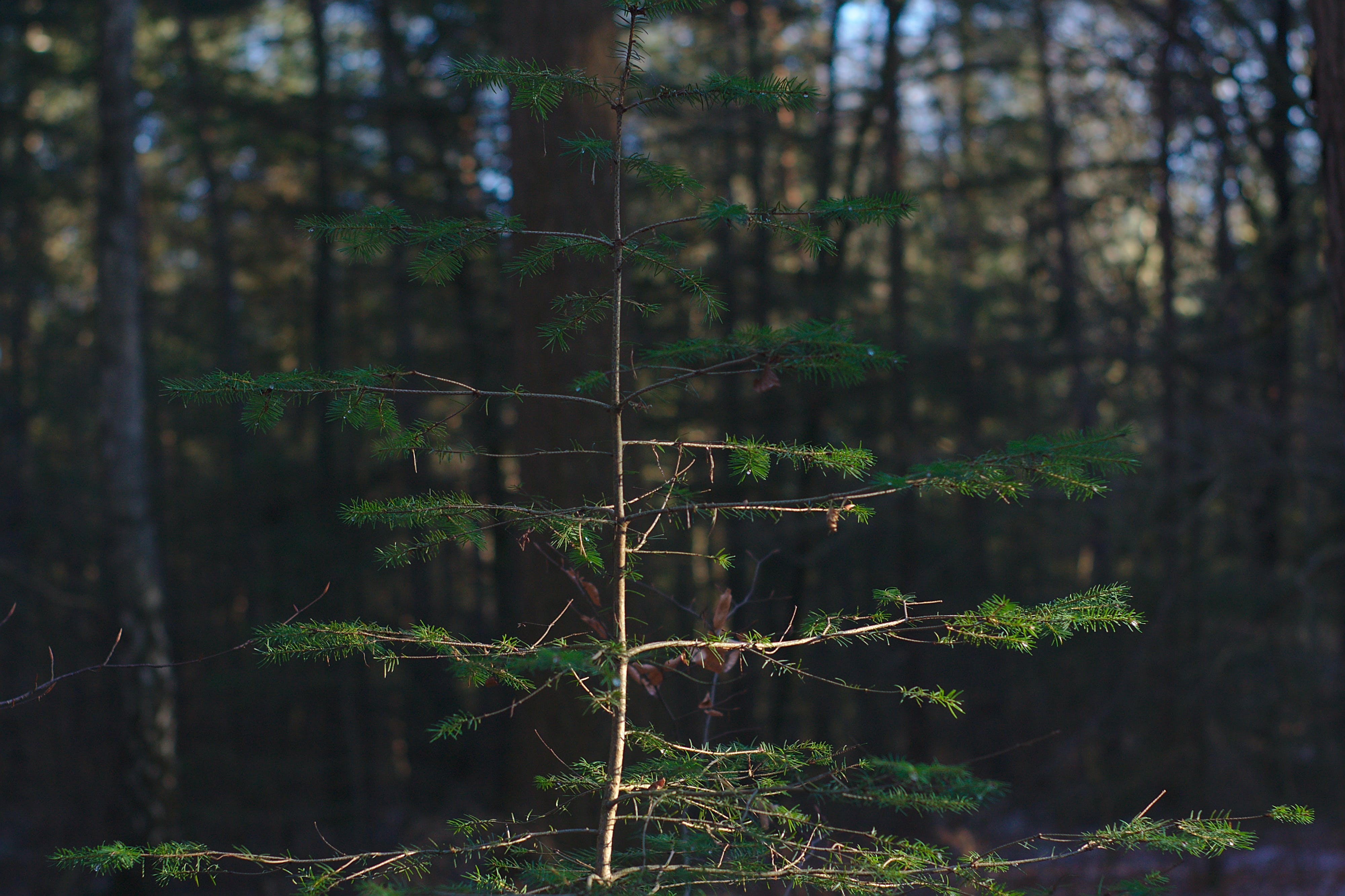 Free stock photo of forest light, green, Little Tree, small tree