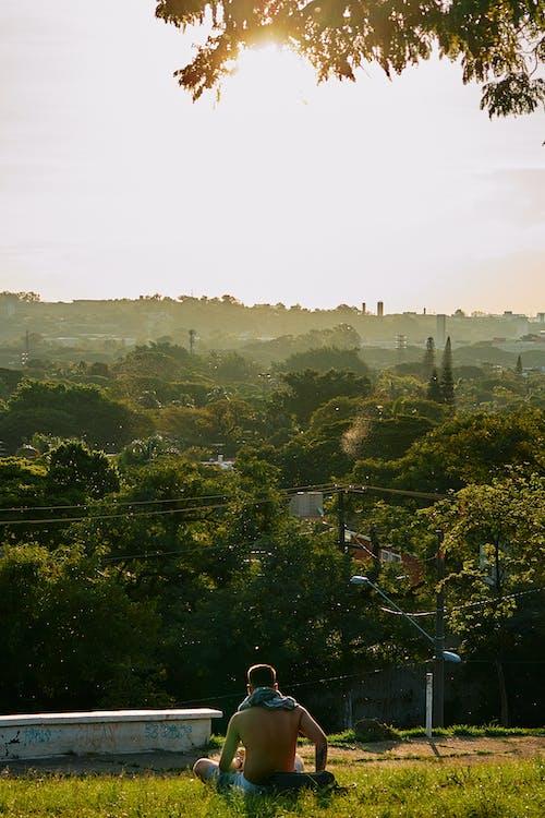 Foto d'estoc gratuïta de arbres, assegut, camp d'herba, d'esquena