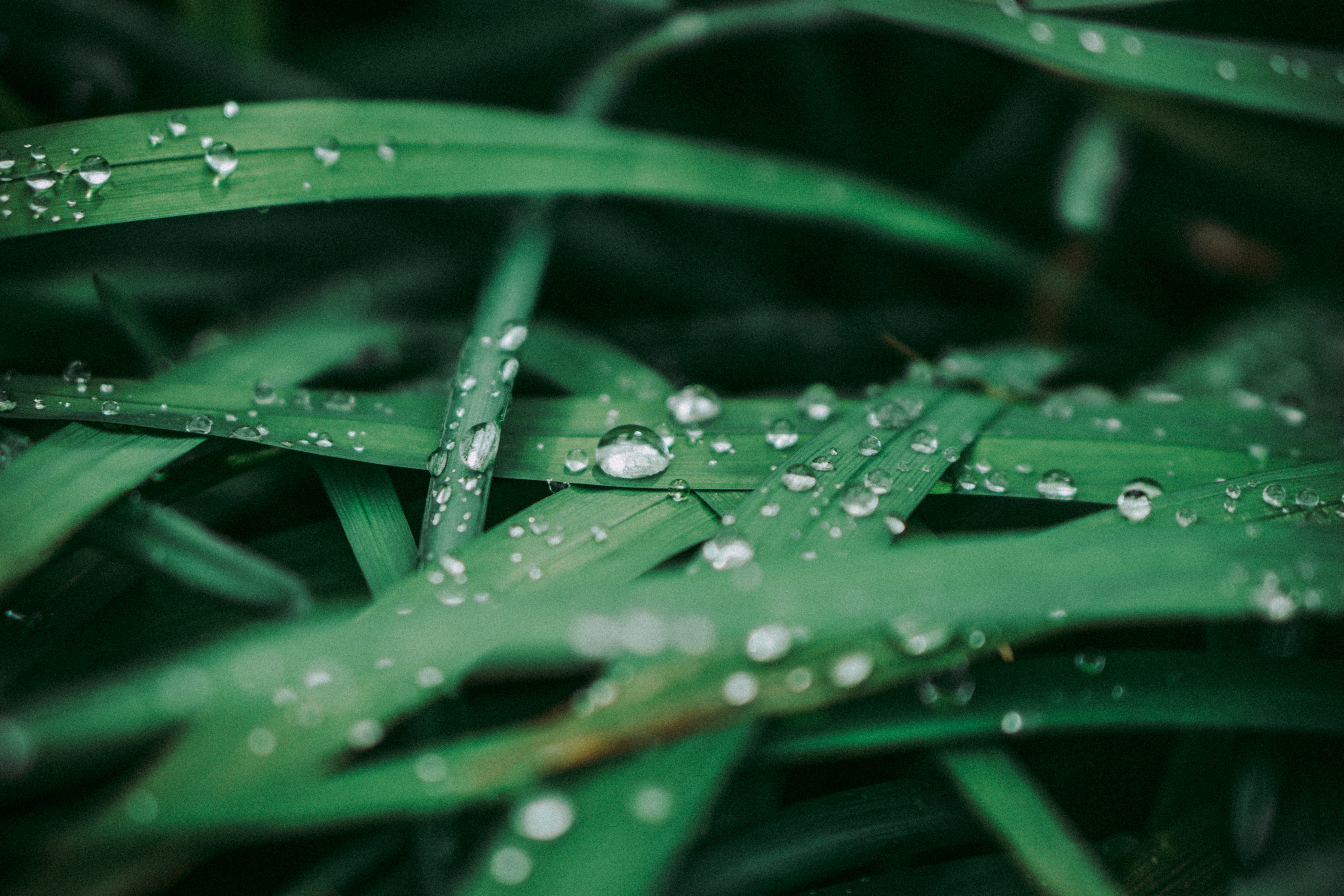 Close-Up Photo of Dewdrops on Leaves