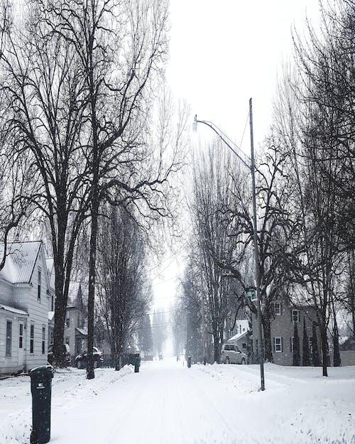 #nature #sky #tree #snow #winter #road 的 免費圖庫相片