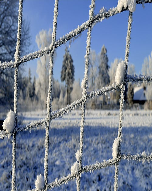 #fence #frost #winter #snow #nature 的 免費圖庫相片