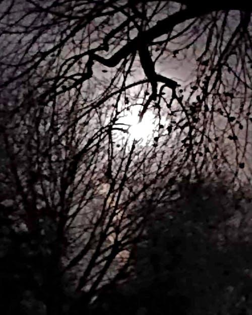 #night #moon #nature #tree #winter #sky 的 免費圖庫相片