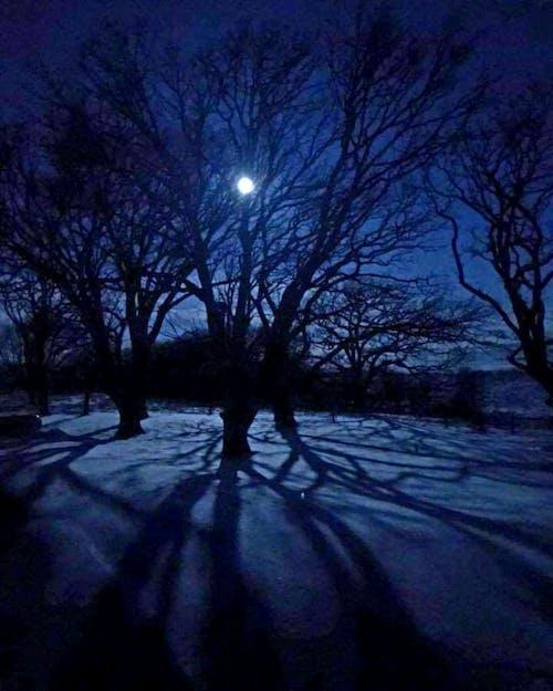 #moon #nature #sky #tree #snow #winter 的 免費圖庫相片