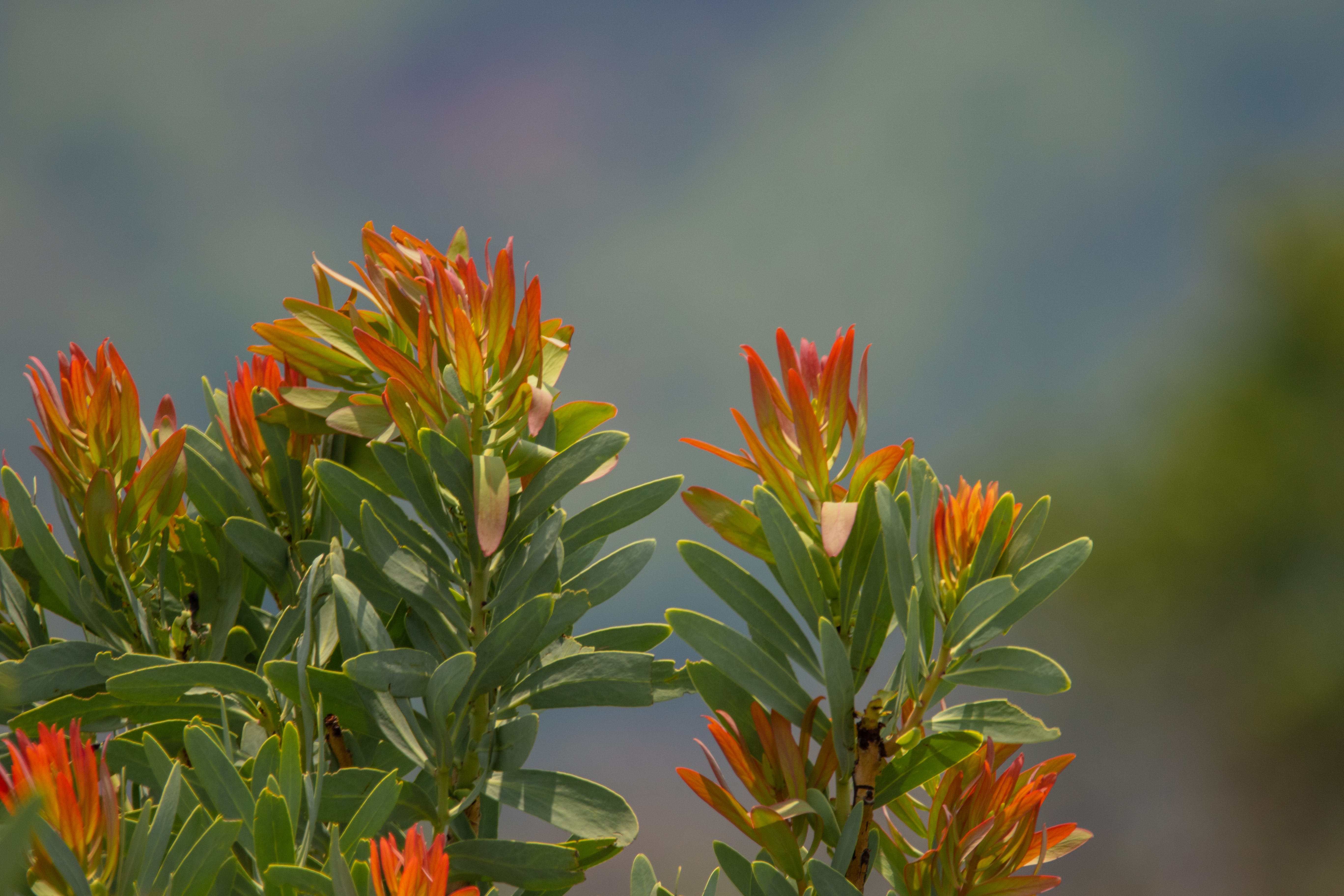 Free stock photo of bush, flowers, leaves, nature
