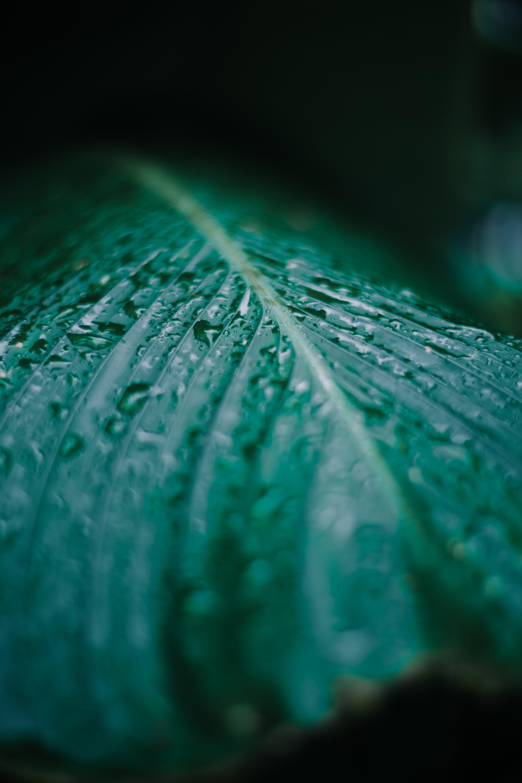 Základová fotografie zdarma na téma čerstvý, hloubka ostrosti, kapičky, kapky vody