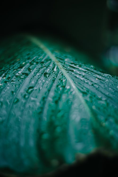 Selective Focus Photography of Water Droplets