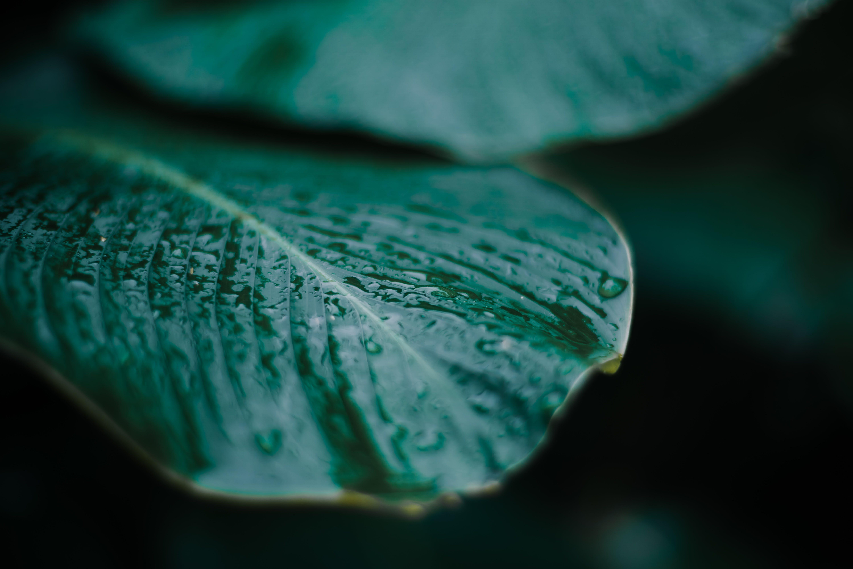 Close-Up Photo of Leaf