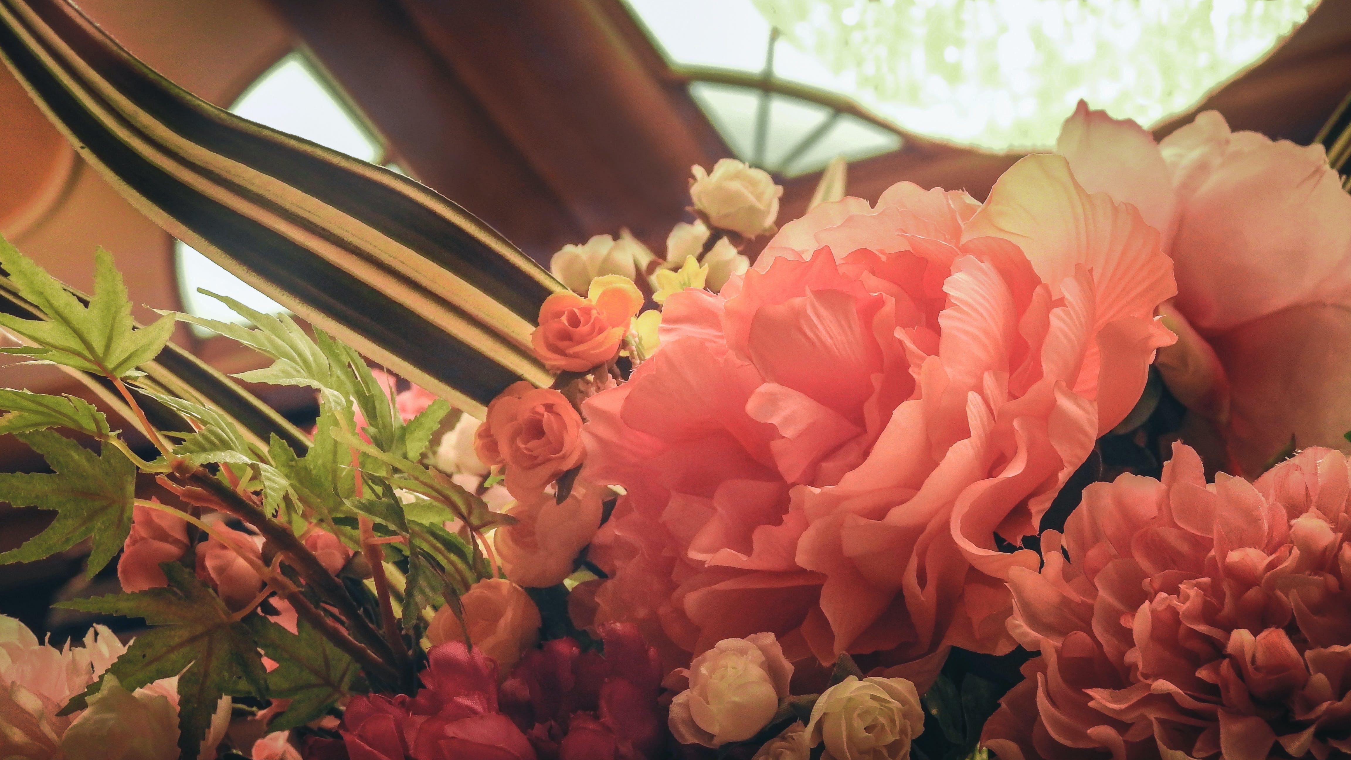 Free stock photo of flower, warm
