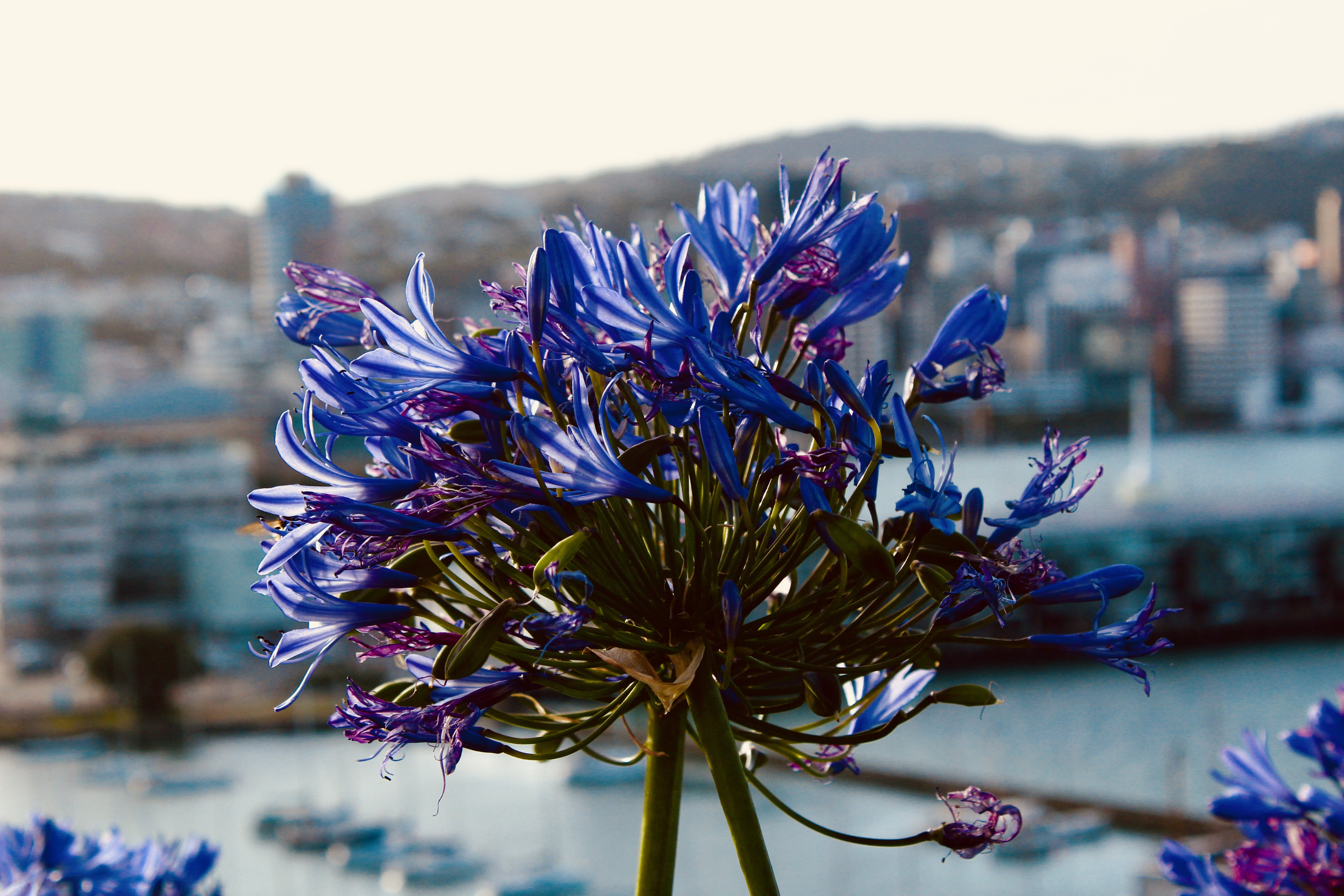 Free stock photo of cityscape, flower, foreground, harbour
