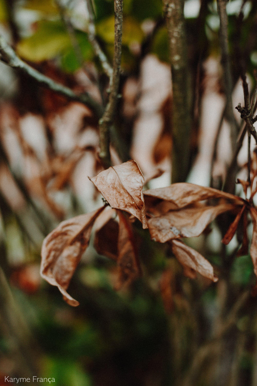 Základová fotografie zdarma na téma příroda