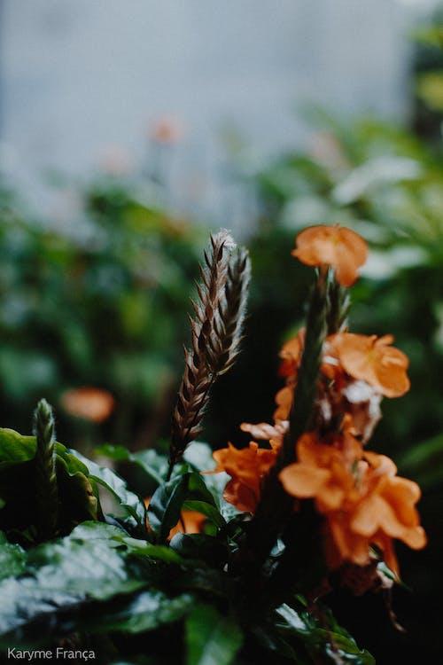 blomst, natur, smukke blomster