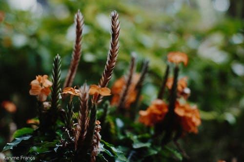 Ingyenes stockfotó gyönyörű virágok, természet, virág témában