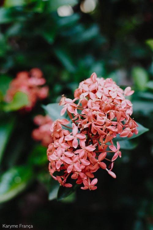 Základová fotografie zdarma na téma krásné květiny, kytka, příroda