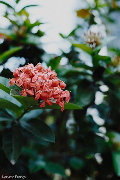 Free stock photo of beautiful flowers, flower, nature