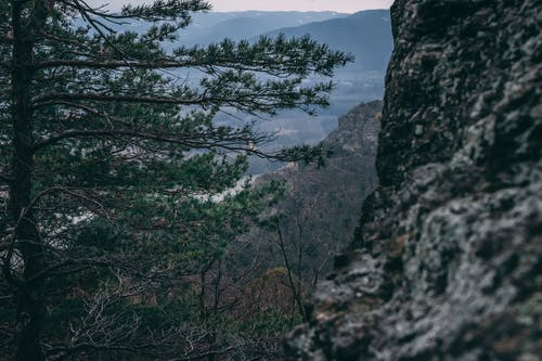 Free stock photo of autumn mood forest, blue mountains, danube river