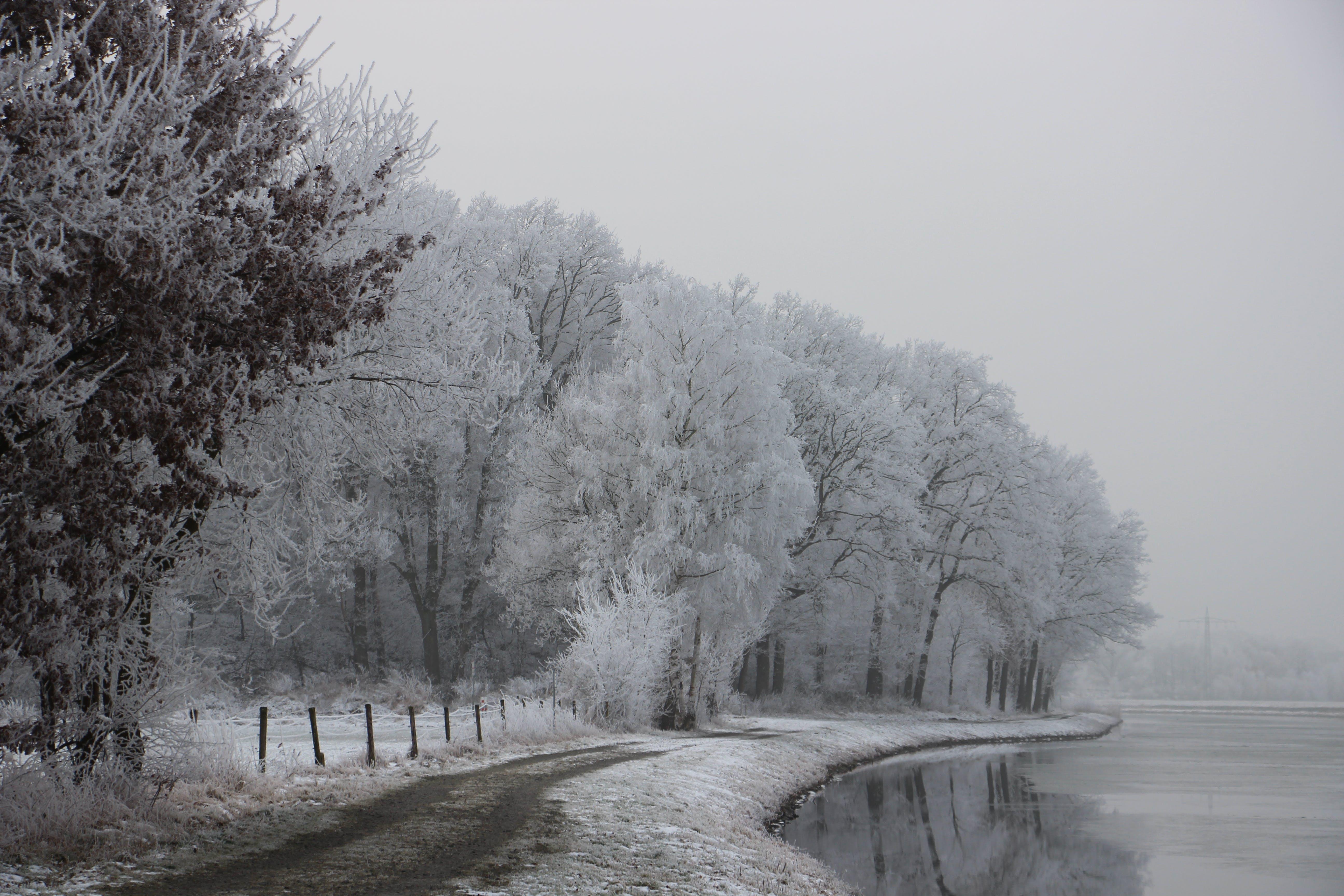 Free stock photo of hoarfrost, ice, ice crystal, white