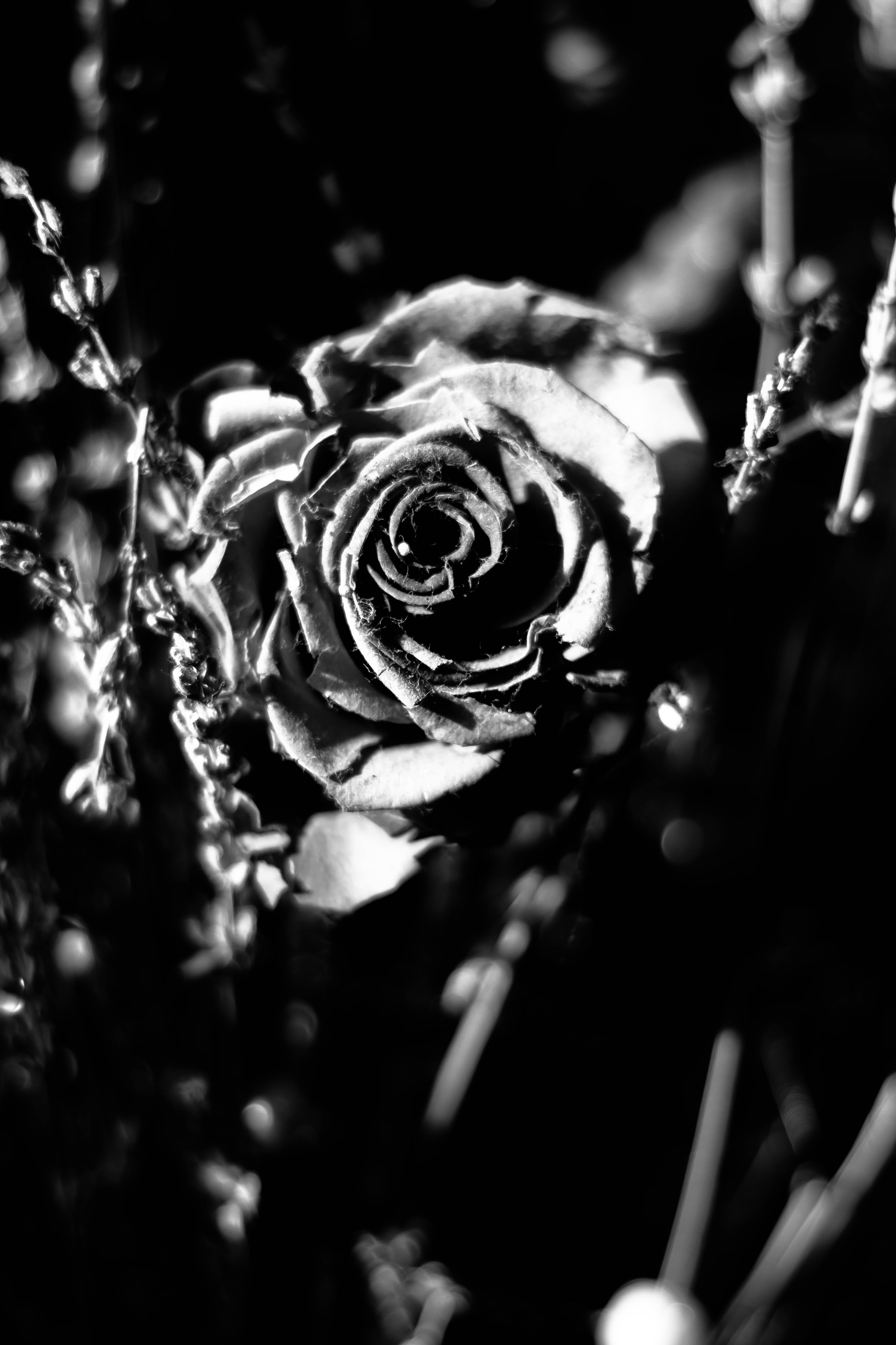 Free stock photo of artificial flowers, black and white