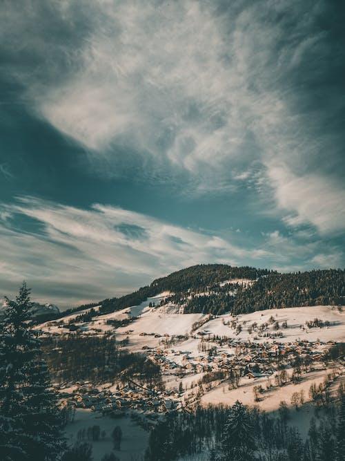 Foto d'estoc gratuïta de arbres, exposició llarga, medi ambient, muntanya